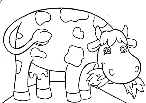 Dairy Cow Eating Grass Coloring Pages