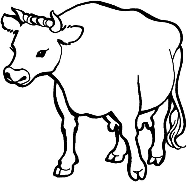 Dairy Cow Full of Milk Coloring Pages