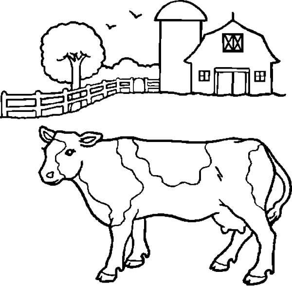 Dairy Cow in Front of Barn Coloring Pages