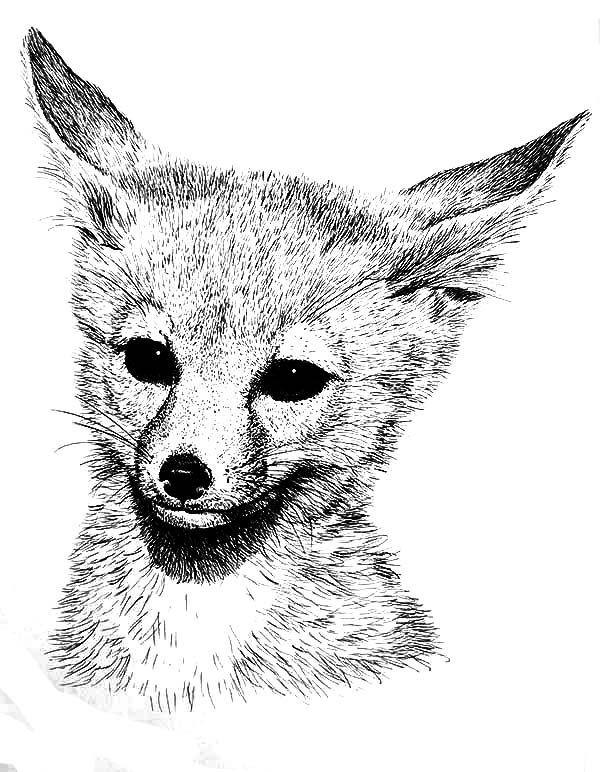 Desert Fox Coloring Pages