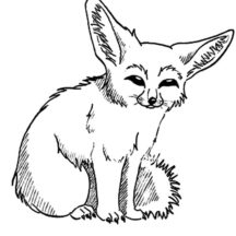Desert Fox Picture Coloring Pages
