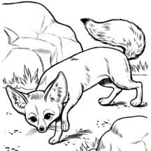 Desert Fox Slip Between Rocks Coloring Pages