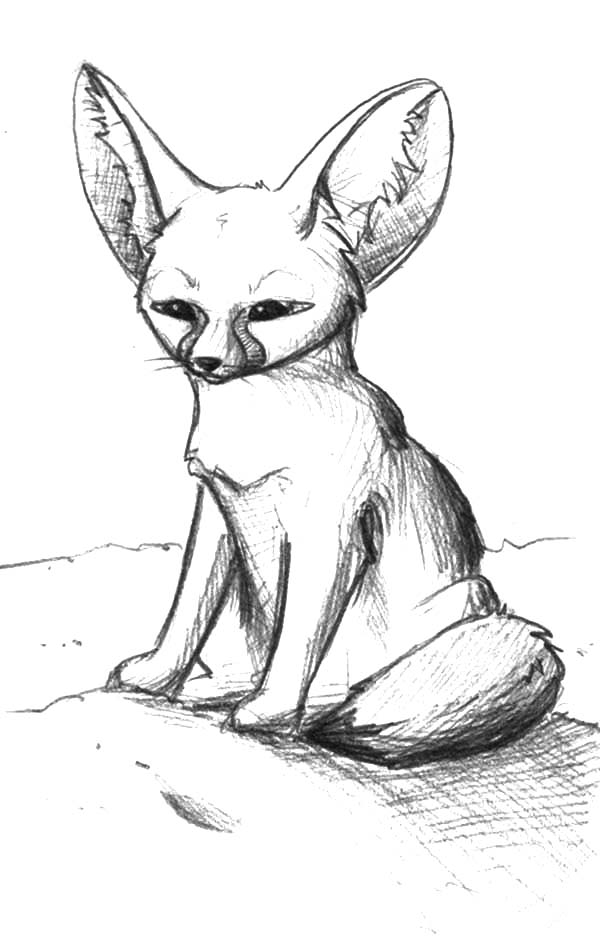 Desert Fox Waiting in Silence Coloring Pages