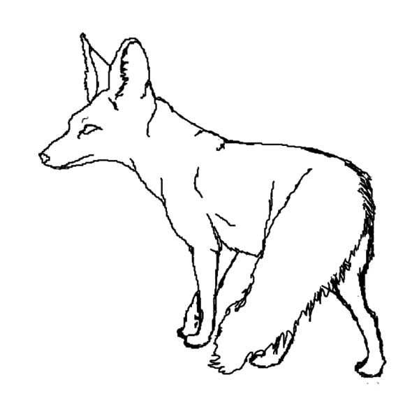 Desert Fox Watching His Prey Coloring Pages