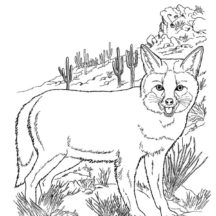 Desert Fox on Rocky Hill Coloring Pages