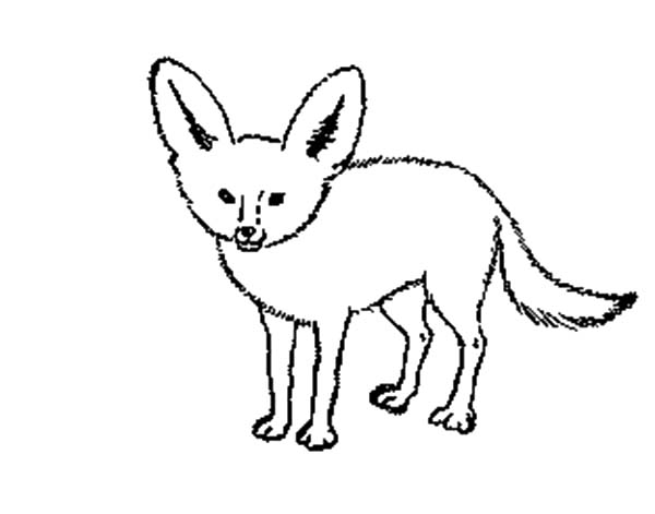 Drawing Desert Fox Coloring Pages