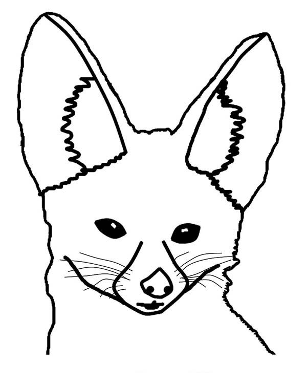 Drawing Desert Fox Head Coloring Pages