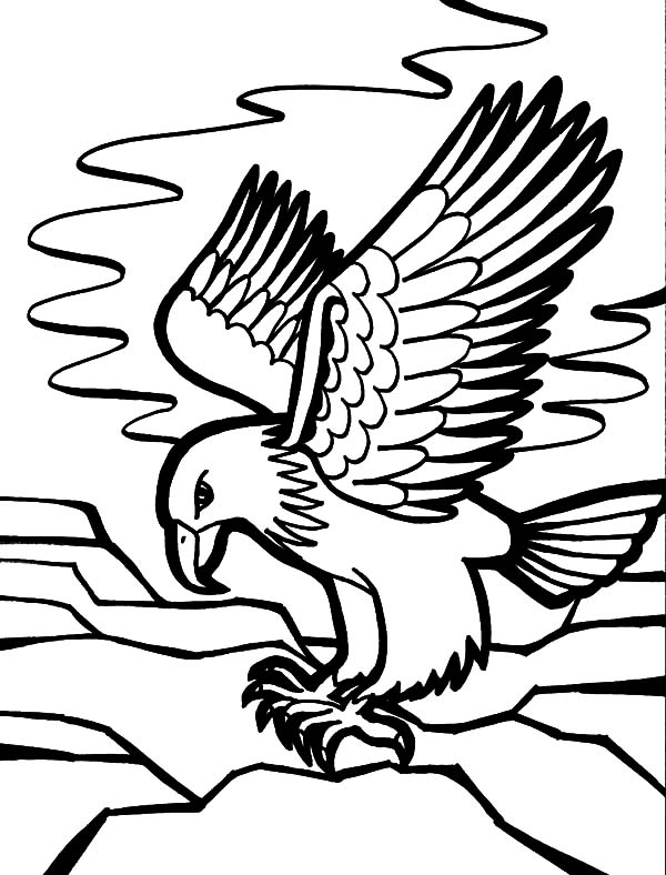 Falcon Bird Coloring Pages