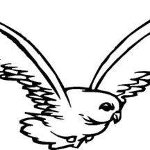 Falcon Bird Fly High Coloring Pages