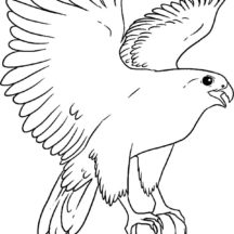 Falcon Bird Landing Coloring Pages