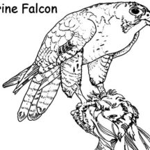 Falcon Bird Nest Coloring Pages