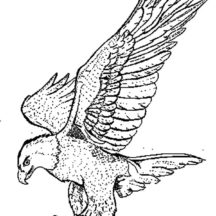 Falcon Bird Powerful Claws Coloring Pages