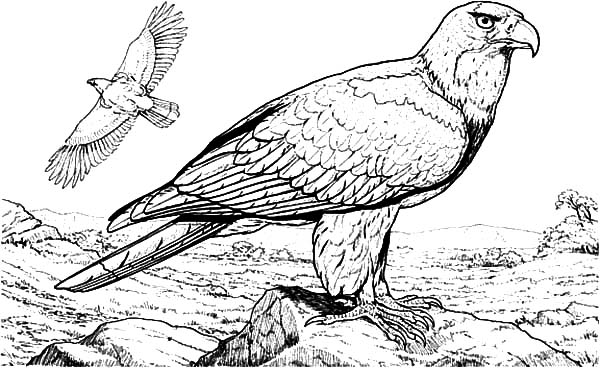 Falcon Bird Standing on Big Rock Coloring Pages