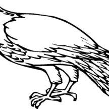 Falcon Fantastic Bird Coloring Pages