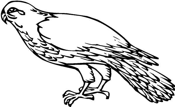Falcon Fantastic Bird Coloring Pages