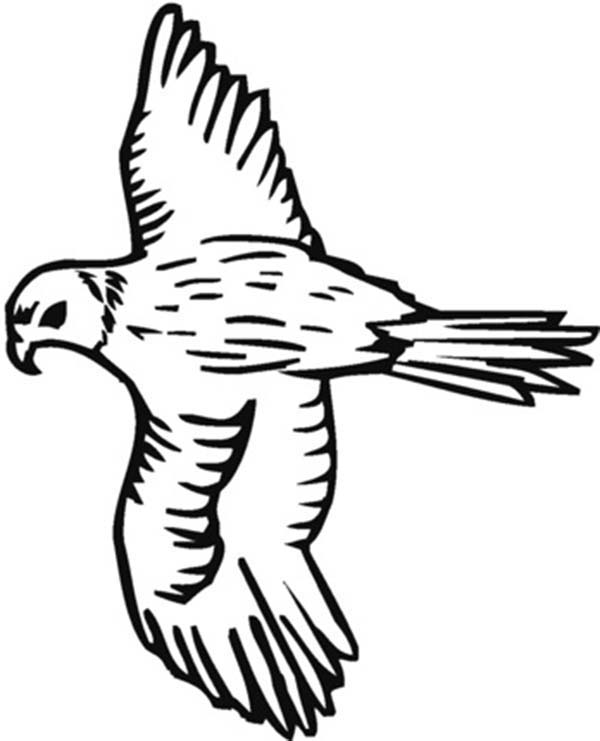 Falcon Hunter Bird Coloring Pages
