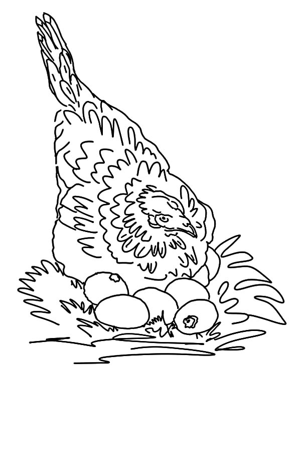 Hen Hatch Chicken Egg Coloring Pages