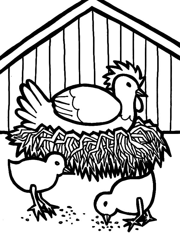 hen hatching egg in chicken coop coloring pages netart seagull clipart question mark seagull clip art free