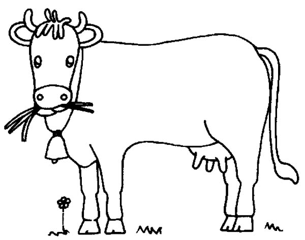 How to Draw Dairy Cow Coloring Pages