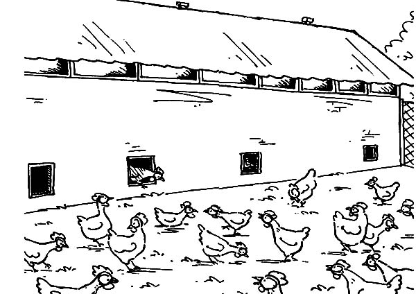 Large Chicken Coop for Farming Coloring Pages