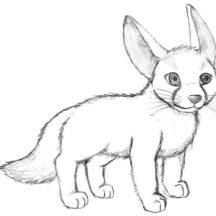 Little Desert Fox Coloring Pages