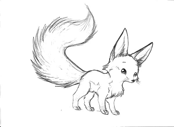 Long Tailed Desert Fox Coloring Pages