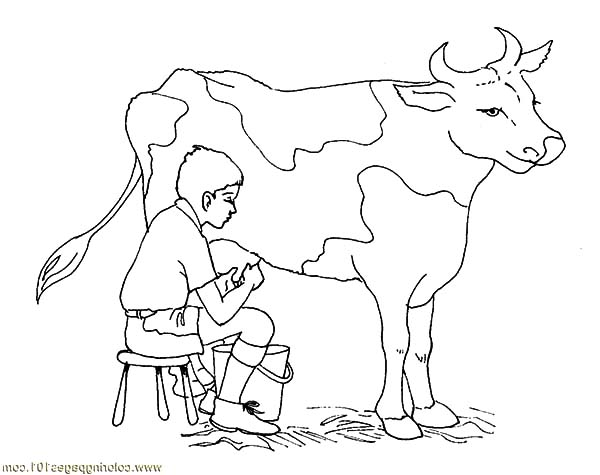 Milking Dairy Cow Coloring Pages