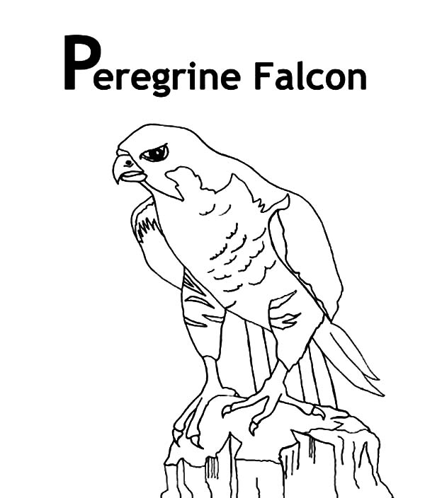 Peregrine Falcon Bird Coloring Pages