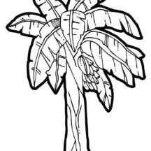 banana plant 001
