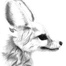 Potrait of Desert Fox Coloring Pages