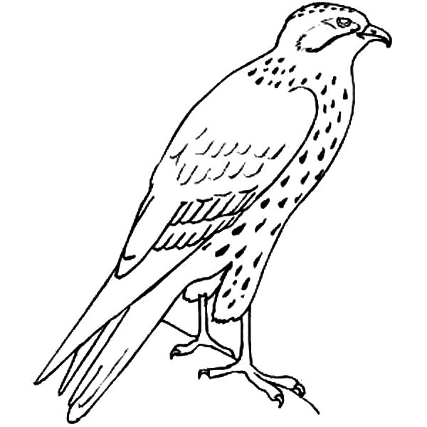 Standing Falcon Bird Coloring Pages