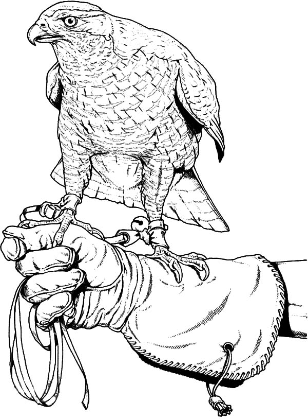 Training Falcon Bird Coloring Pages