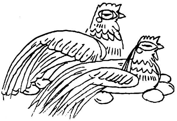 Twin Chicken Lay Egg Coloring Pages