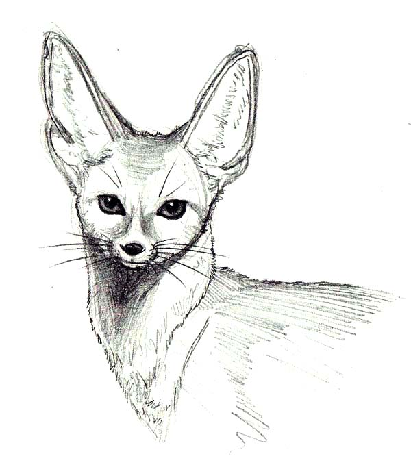 Wild Desert Fox Coloring Pages