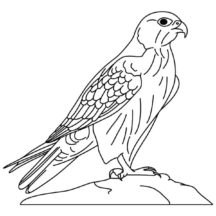 Wild Falcon Bird Coloring Pages