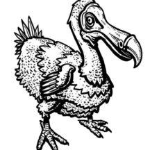 Wildlife Dodo Bird Coloring Pages
