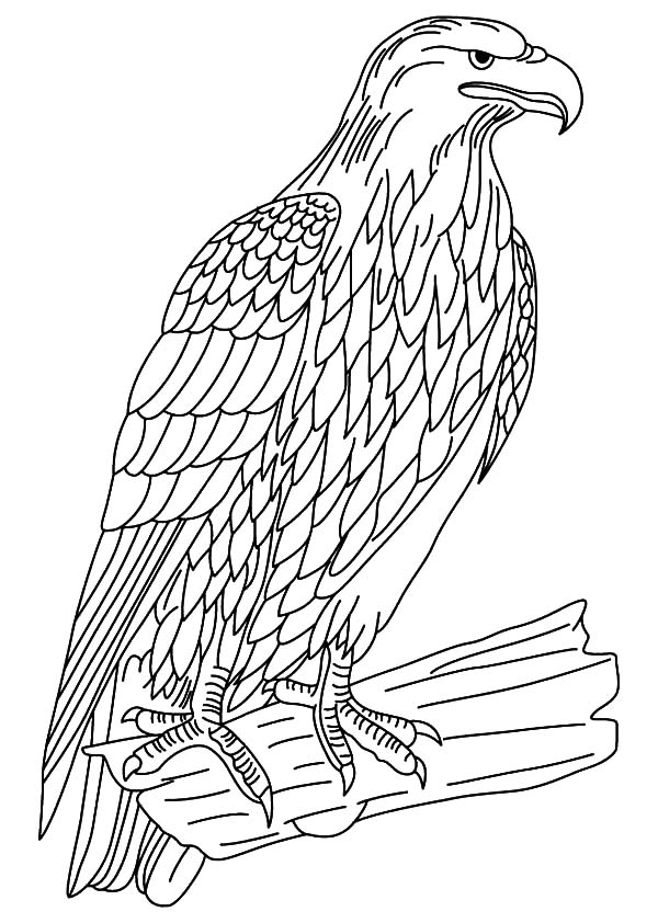 Wildlife Falcon Bird Coloring Pages