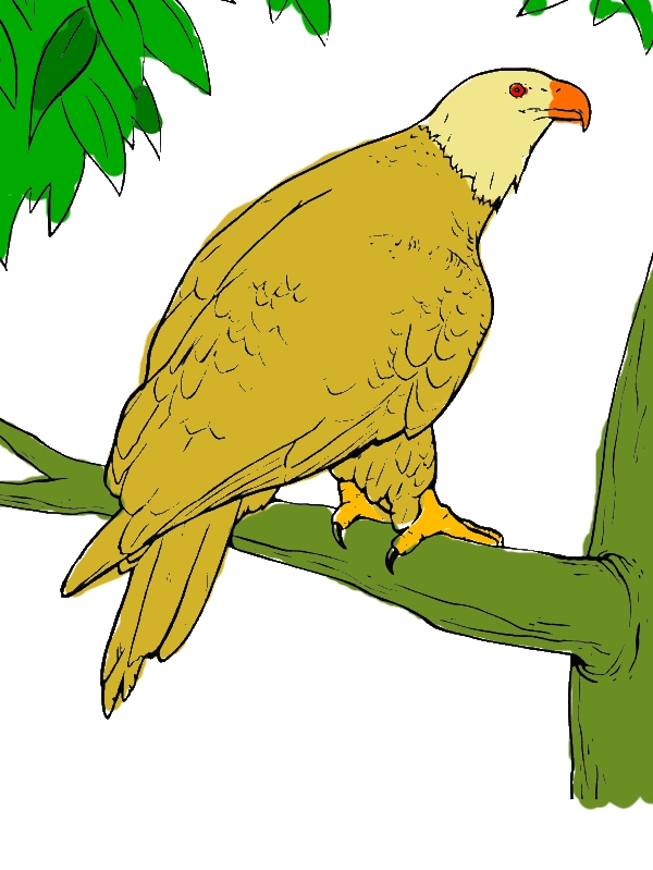 Bald Eagle in the Zoo Coloring Page by years old Rosemarie J  Martinez
