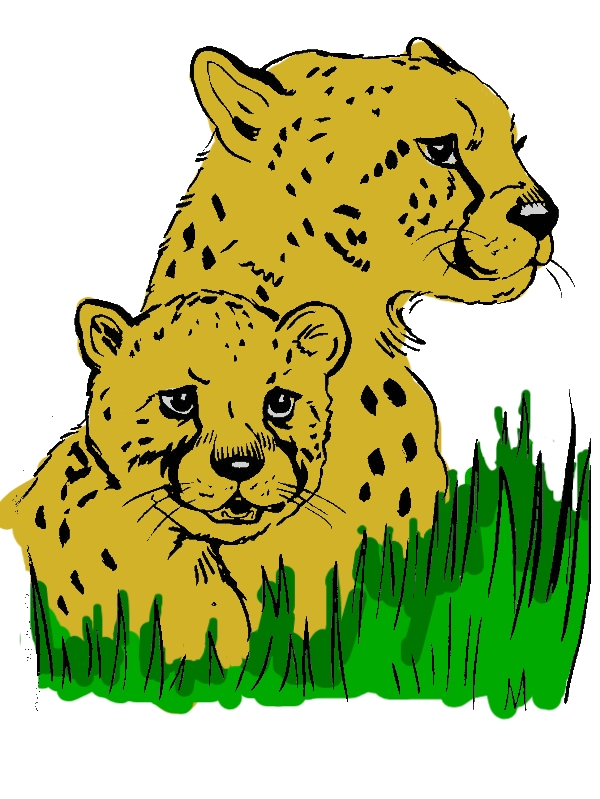 Cheetah Hide Under the Grass Coloring Page by years old Xavier L  Bunker