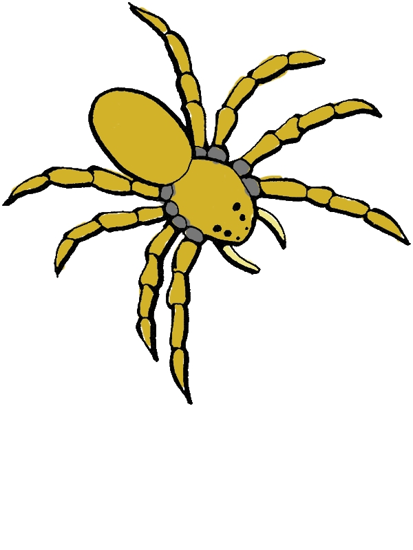 Dangerous Spider Coloring Page by years old Felicia D  Nichols