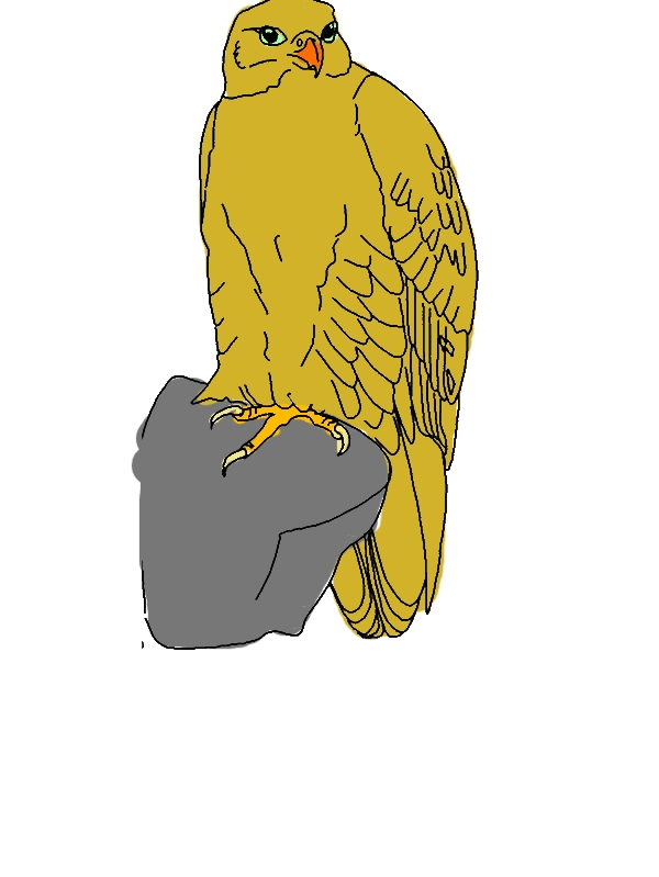 Drawing Falcon Bird Coloring Pages by years old Victor L  Rees