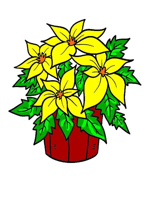 Poinsettia in a Bucket for National Poinsettia Day Coloring Page by years old James K  Brown